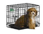 iCrate 1518DD Double Door Folding Dog Crate