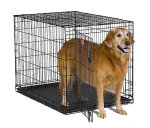iCrate 1542 Single Door Folding Dog Crate