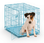 iCrate 1524BL Single Door Folding Dog Crate in Blue