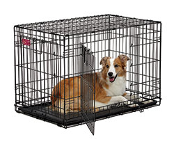 Life Stages ACE-436DD Double Door Folding Dog Crate