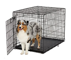 Life Stages ACE Single Door Folding Dog Crate