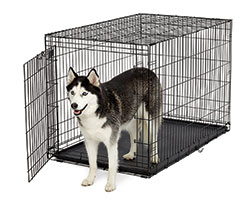 Life Stages ACE-448 Single Door Folding Dog Crate