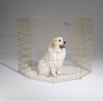 Gold Zinc Exercise Pen With Door by Midwest