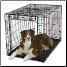 Ovation™ 1942 Suitable for Dogs 71 - 90 lbs