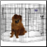 Eight Panel 36 Inch Tall Exercise Pen With Door