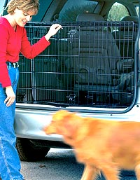 iCrate Double Door Dog Crate in an SUV