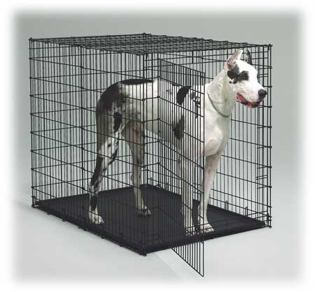 xxl midwest dog crates 54 inch crate giant dog crates. Black Bedroom Furniture Sets. Home Design Ideas