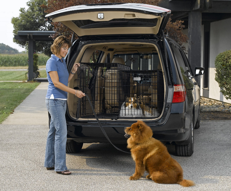 Best Vehicle For Large Dog Crates
